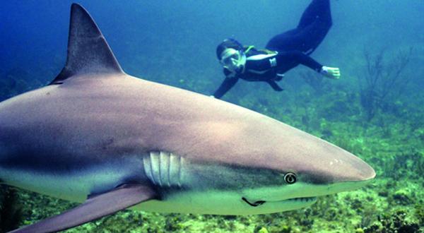 Photo Brief: Sharks in Bimini SD HC