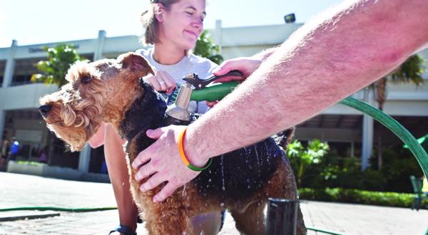 Photo Brief: Puppy Love