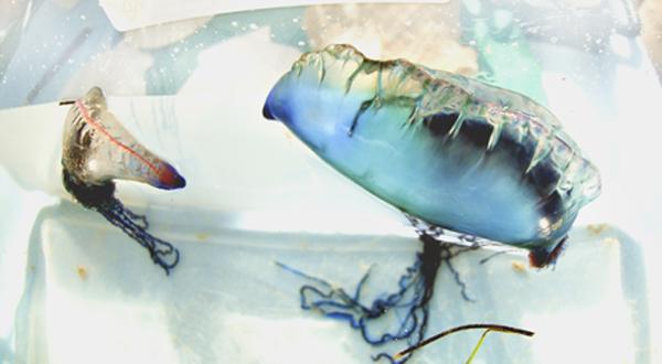 Photo Brief:  Art By the Sea