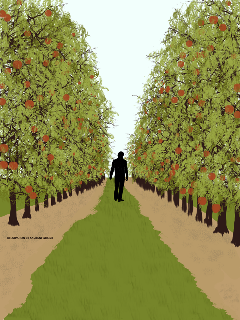 EDGE_apple orchard