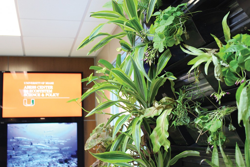 "The ECS department installed a living ""green wall"" in the department lobby in the Ungar building last semester. Hallee Meltzer // Staff Photographer"