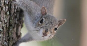 Dr. Thaddeus McRae's research focuses on the communication of squirrels. Photo courtesy of  Thaddeus McRae (www.thaddeusmcrae.com).
