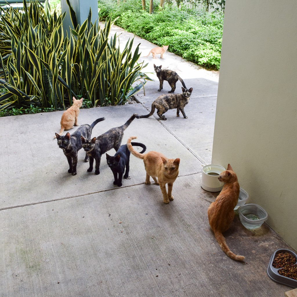 Feral cats roam around the Frost School of Music, near the Rathskeller, in anticipation of their daily feeding. Evelyn Choi // Contributing Photographer