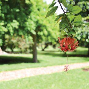 arboretum_ap