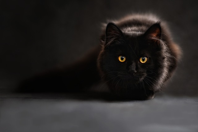 Despite superstitions, black cats deserve love too
