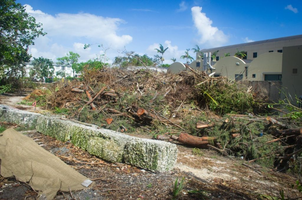 Arboretum among most affected areas on campus weeks after Hurricane Irma