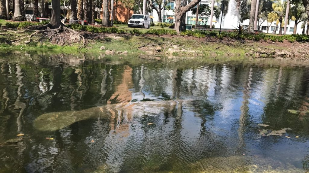 What I learned from a chance meeting with a manatee