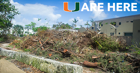 How did UM deal with Irma?