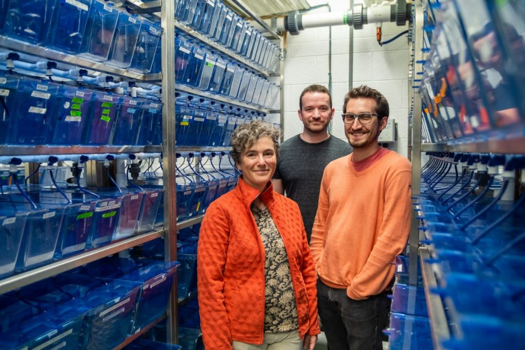 UM's underground lab: Are clear fish a clue to understanding Autism?