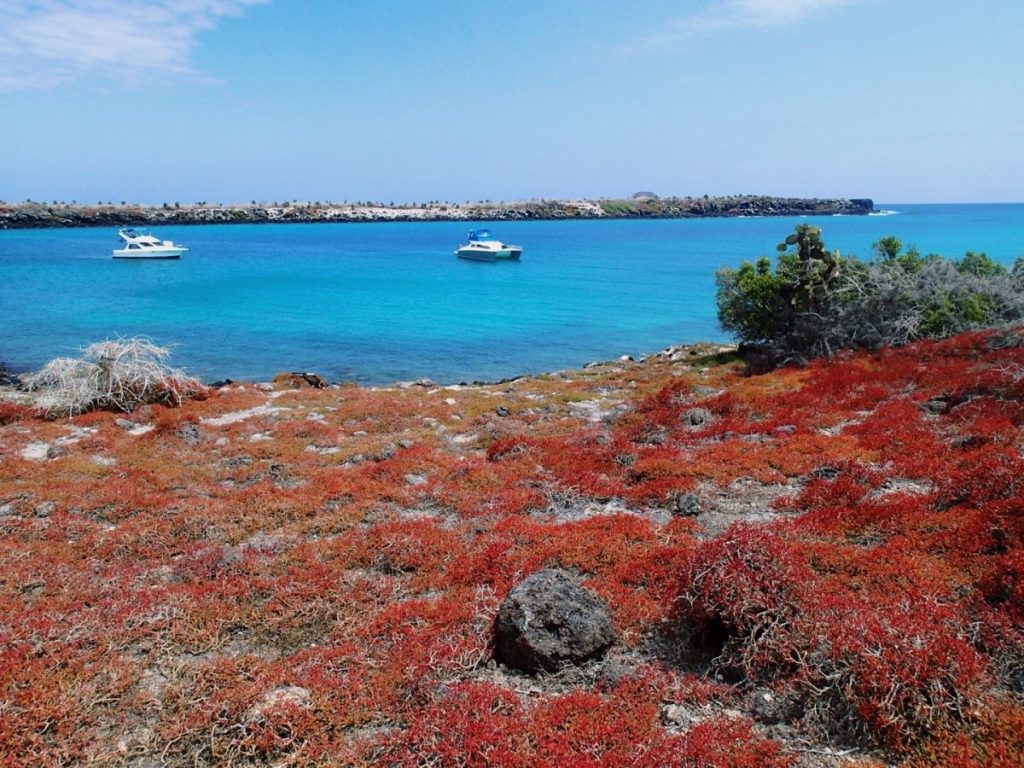 Students visited Santa Cruz Island, the main tourist destination in the Galapagos.