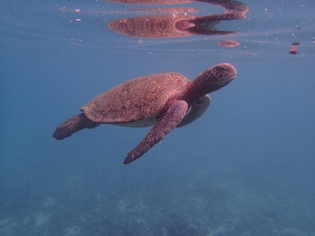While snorkeling for their terrestrial biology class, students were able to see sea turtles and several other creatures.