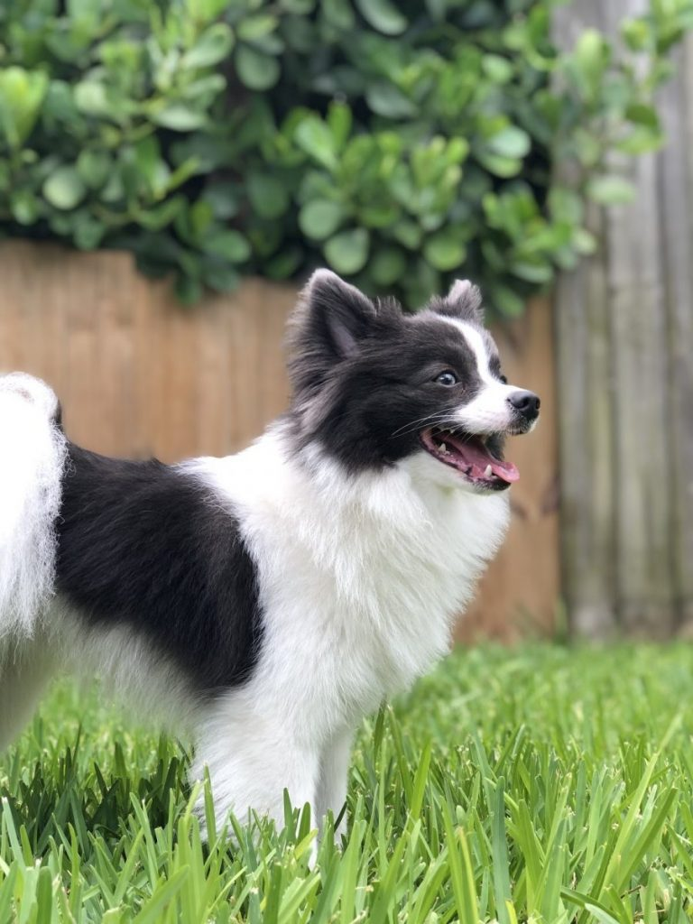 Harrington's dog, Rocket, is keeping her company during her quarantine.
