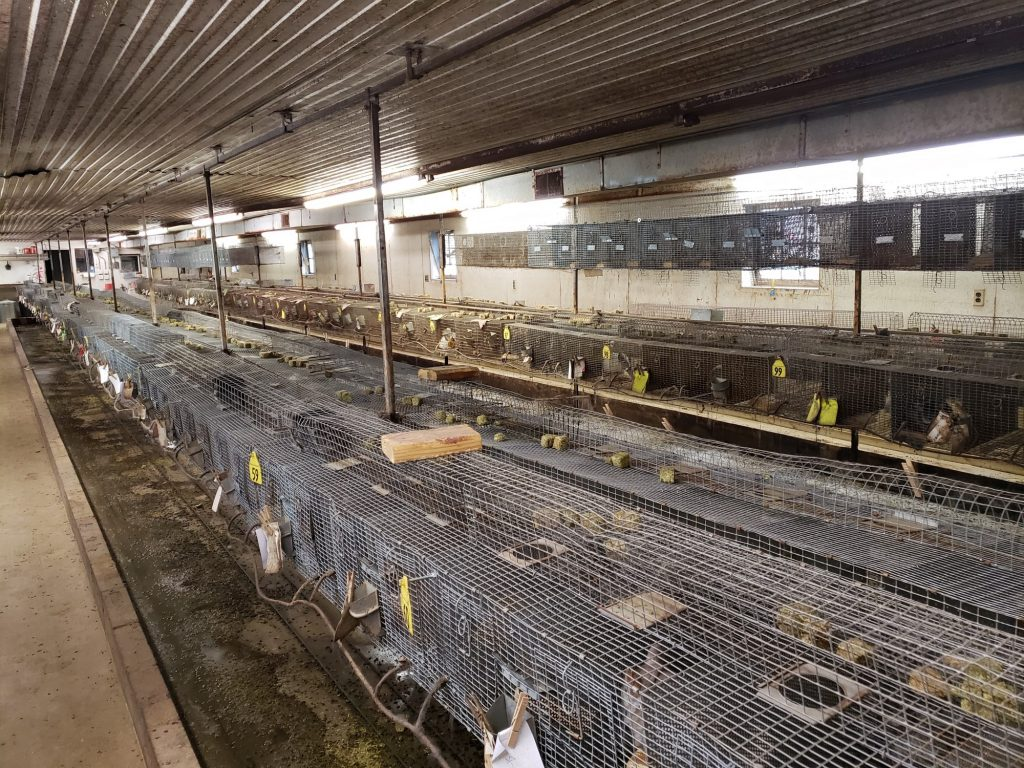 Small and dirty cages line the floor at Moulton Ranch's chinchilla housing facility.